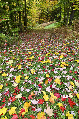 Photograph - Colorful Path by Alan L Graham