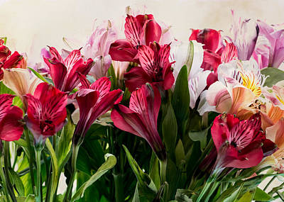 Photograph - Colorful Peruvian Lillys by Donna Lee