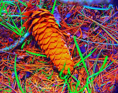 Photograph - Colorful Pinecone by Michael Sokalski