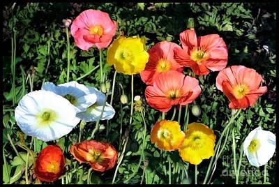 Photograph - Colorful Poppy Flowers by Gabriele Pomykaj