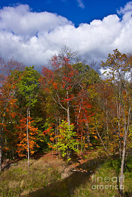 Photograph - Colorful Ravine Vertical by Bill Woodstock