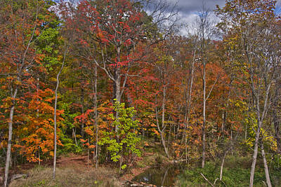 Photograph - Colorful Ravine With Sky Closeup by Bill Woodstock