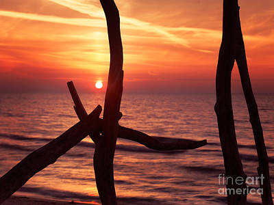 Pinery Photograph - Colorful Red Sunset Behind Driftwood Sculpture by Oleksiy Maksymenko