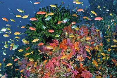 Undersea Photograph - Colorful Reef Scenic, Triton Bay, Fak by Jaynes Gallery