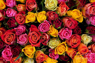 Food And Flowers Still Life Rights Managed Images - Colorful roses background Royalty-Free Image by Michal Bednarek