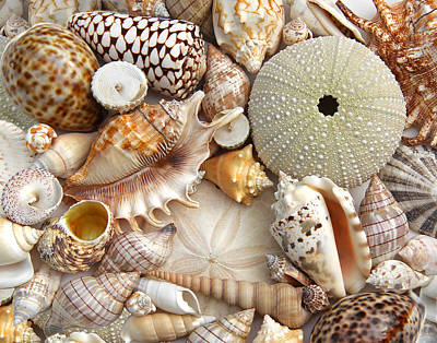 Photograph - Colorful Seashell Variety by Jennie Marie Schell