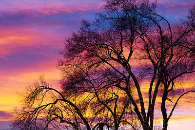 Andscape Photograph - Colorful Silhouetted Trees 25 by James BO  Insogna