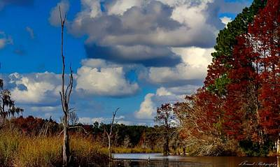 Photograph - Colorful Southern Fall Image by Debra Forand