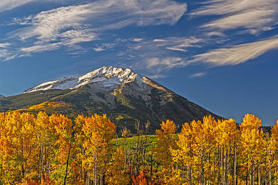 Photograph - Colorful Stand Of Golden Aspen Trees Blue Skies And Snow Capped Mountains by Willie Harper