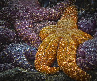 Colorful Starfish Art Print