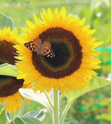 David Jones Photograph - Colorful Sunflower by David  Jones