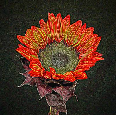 Photograph - Colorful Sunflower by Judy Vincent