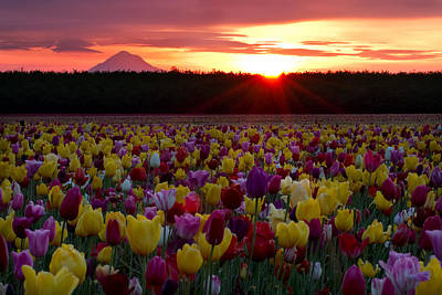Photograph - Colorful Sunrise by Teresa Hunt