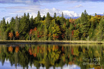 Photograph - Colorful Trees In Algonquin Park by Les Palenik