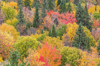 Photograph - Colorful Trees In Fall by Pierre Leclerc Photography