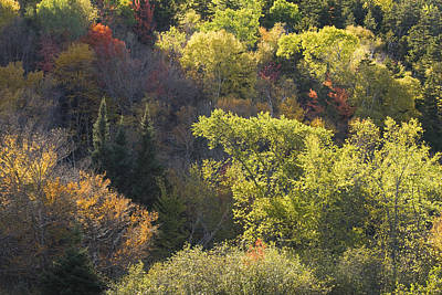 Photograph - Colorful Trees In Maine Forest by Keith Webber Jr