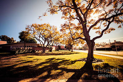 Photograph - Colorful Trees Of Long Beach In The Autumn by Sviatlana Kandybovich