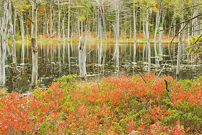 Photograph - Colorful Trees Reflecting In Maine Beaver Pond by Keith Webber Jr