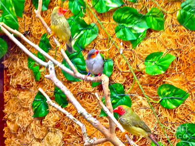 Photograph - Colorful Trio by Barbara Plattenburg
