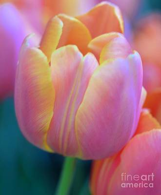 Colorful Tulip Art Print by Kathleen Struckle