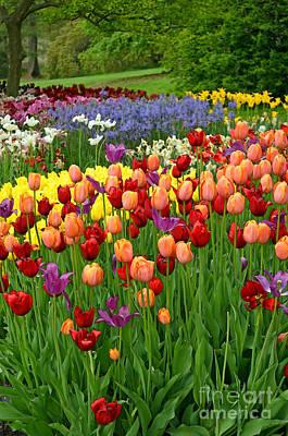 Wild Weather - Colorful Tulips by Eva Kaufman