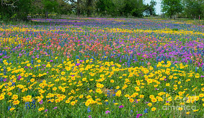 Wildflowers Photograph - Field Of Wildflowers by Tod and Cynthia Grubbs