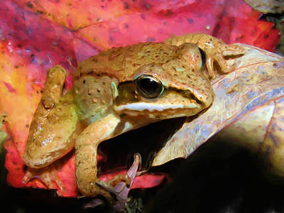 Painting - Colorful Wood Frog by Christina Rollo