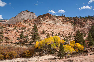 Geology Photograph - Colorful Zion by John M Bailey