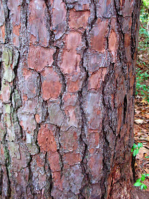 Photograph - Colors And Patterns Of Pine Bark by Connie Fox