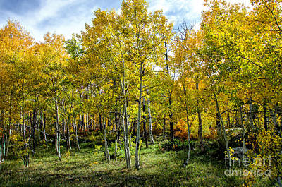 Fort Collins Photograph - Colors Colorado by Keith Ducker