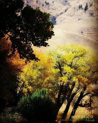 Photograph - Colors In The Canyon by Bobbee Rickard