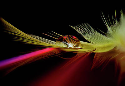 Colours Photograph - Colors In The Drop by Aida Ianeva