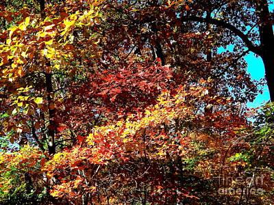 Photograph - Colors by John Potts