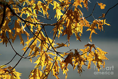 Photograph - Colors Of Autumn by Ben Sellars