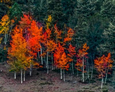 Digital Art - Colors Of Autumn by Ernie Echols