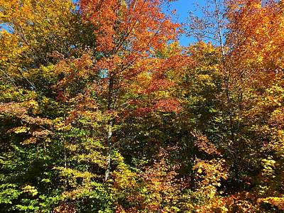 Photograph - Colors Of Autumn by Gene Cyr