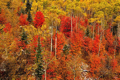 Photograph - Colors Of Autumn by Greg Norrell