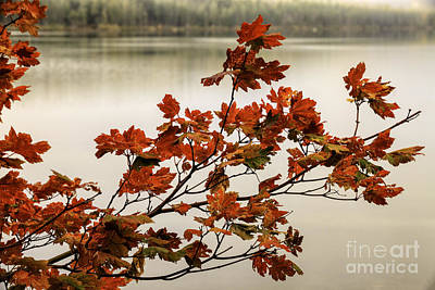 Photograph - Colors Of Autumn by Stuart Gordon