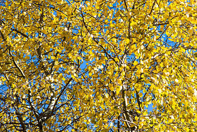 Colors Of Autumn - Yellow - Featured 3 Art Print by Alexander Senin