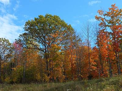 Photograph - Colors Of Fall 1 by Gene Cyr