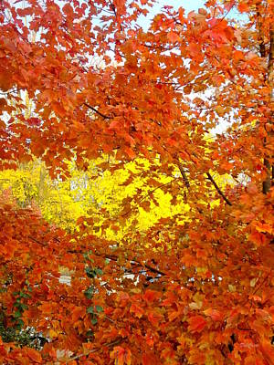 Photograph - Colors Of Fall 2 by Deborah  Crew-Johnson