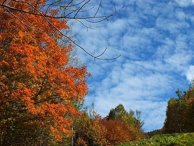 Photograph - Colors Of Fall 2 by Gene Cyr