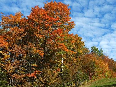 Photograph - Colors Of Fall 4 by Gene Cyr