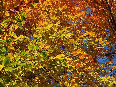 Photograph - Colors Of Fall 5 by Gene Cyr