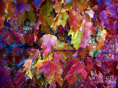 Colors Of Fall Art Print by Janice Westerberg