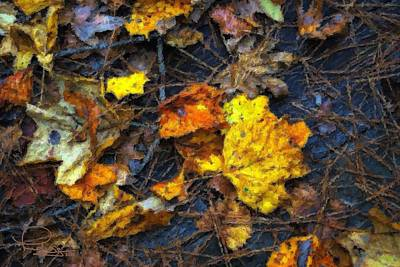 Art Print featuring the photograph Colors Of Fall by Ludwig Keck