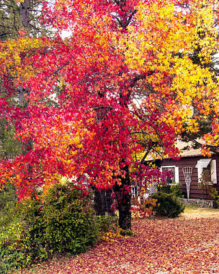 Photograph - Colors Of Fall  by William Havle