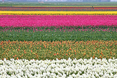 Photograph - Colors Of Holland by Lars Ruecker