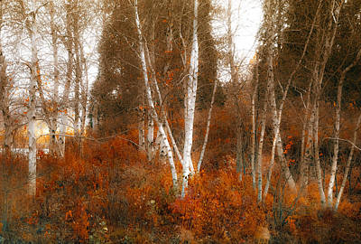 Photograph - Colors Of Nature by Julie Palencia