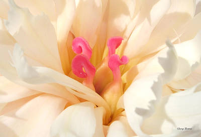 Colors Of Nature - Pink Centerpiece Art Print